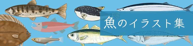 魚のイラスト素材集