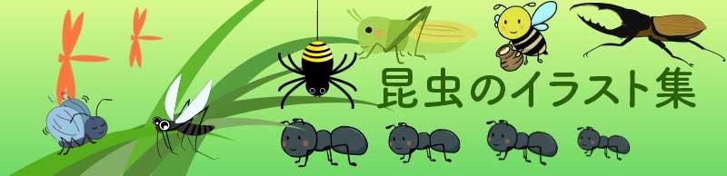 昆虫のイラスト集