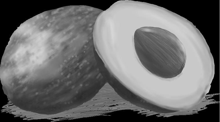 白黒のアボガドのイラスト