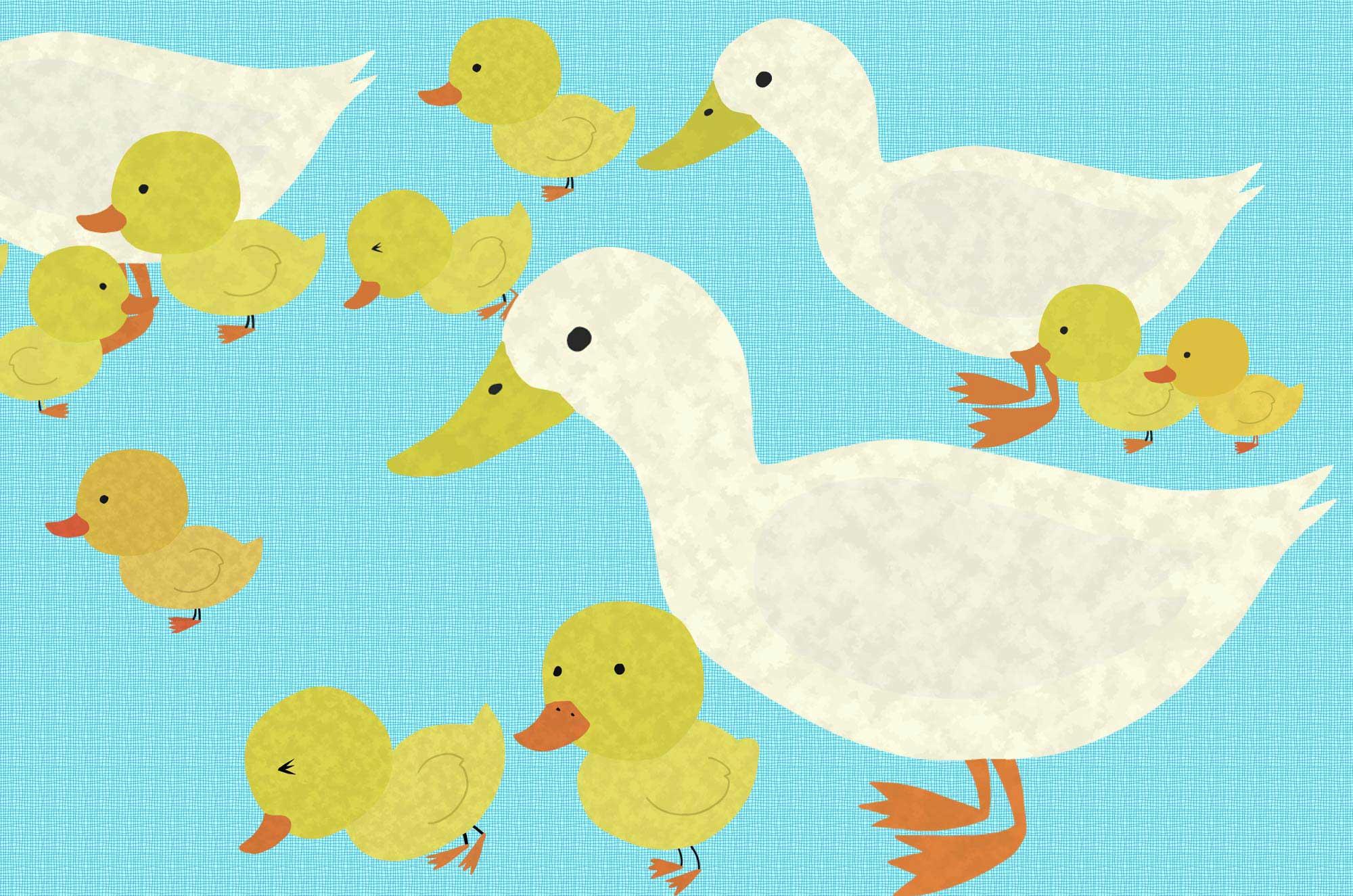 アヒルのイラスト - よちよち歩く可愛い鳥の無料素材