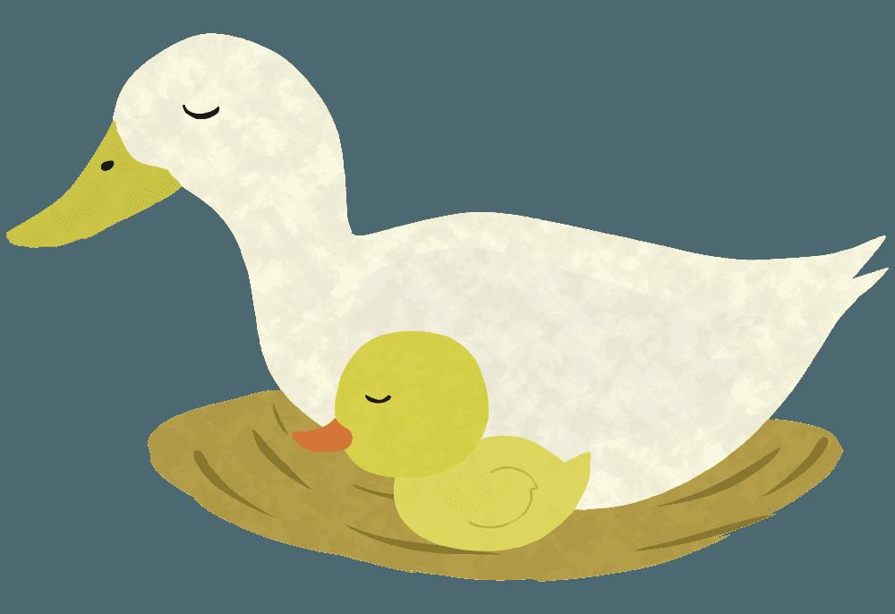 巣で眠るアヒルの親子イラスト