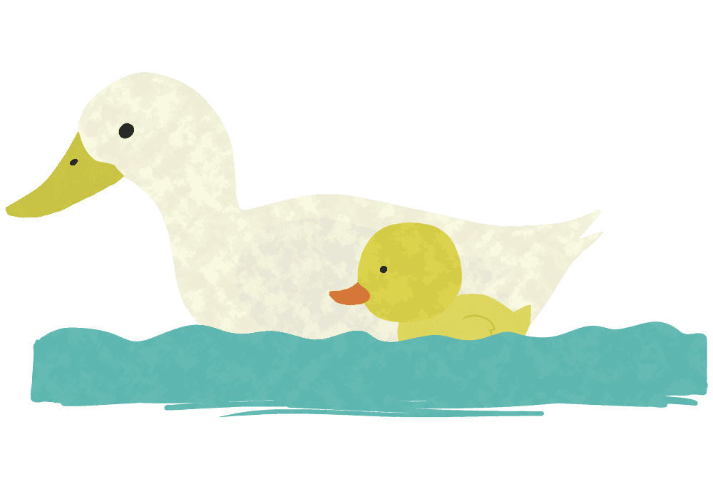 親子で泳ぐアヒルイラスト