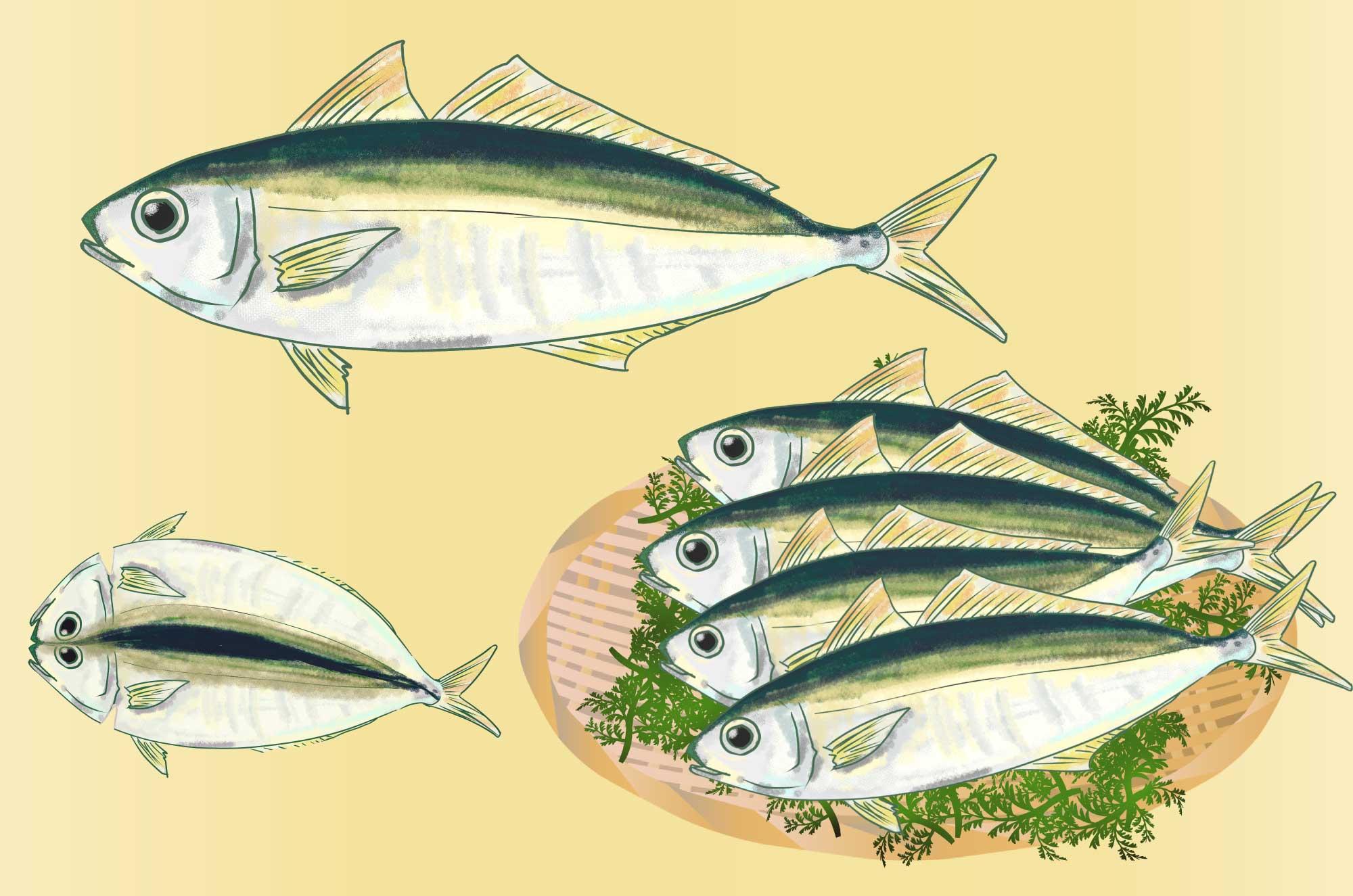 アジのフリーイラスト - 手書きの無料魚素材 - チコデザ