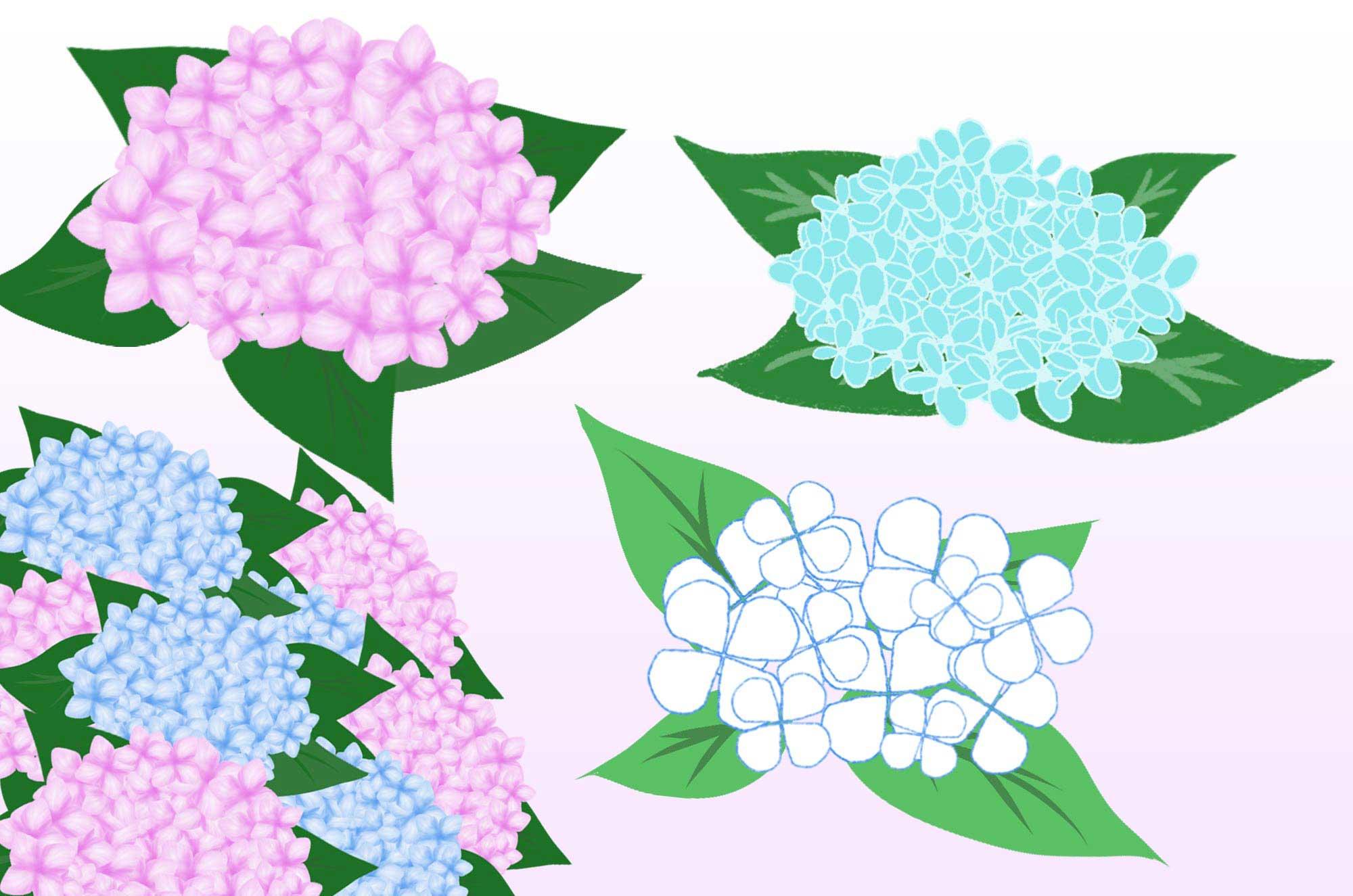 あじさいイラスト - とっても可愛い花の無料素材