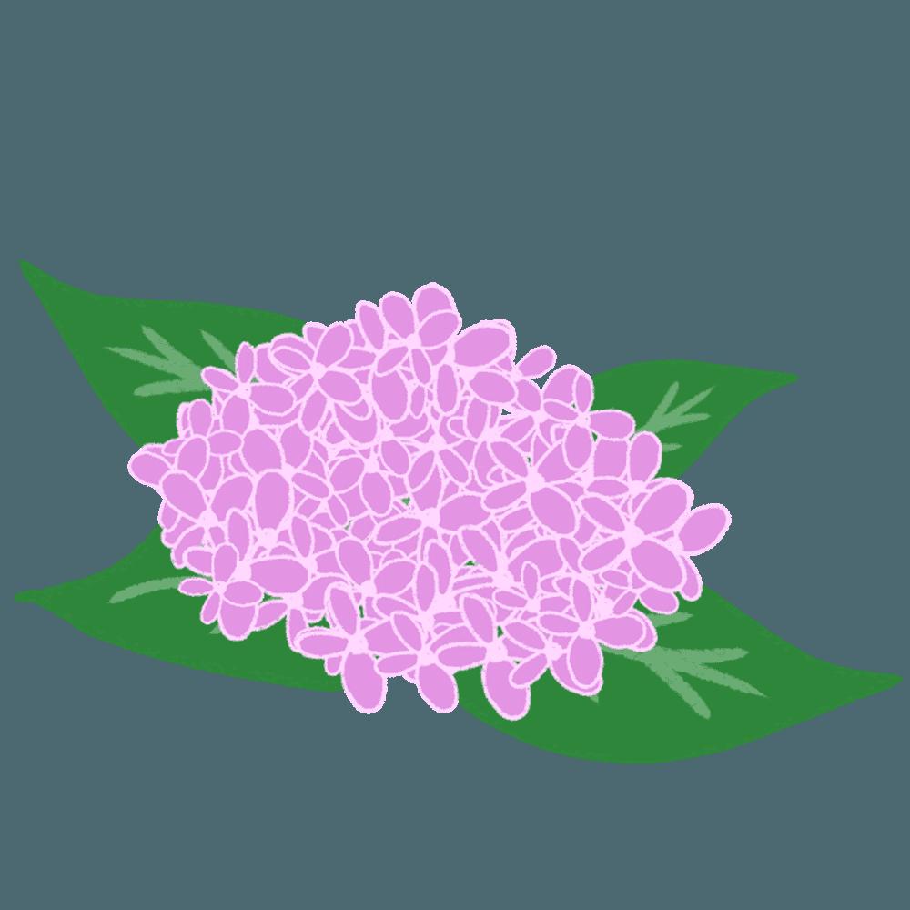 緻密な紫色のあじさいイラスト