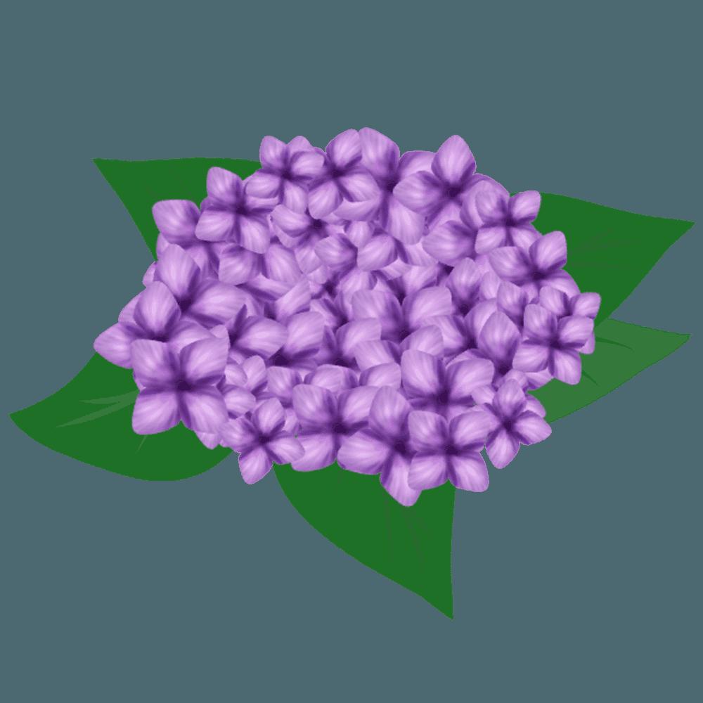 紫色のあじさいイラスト