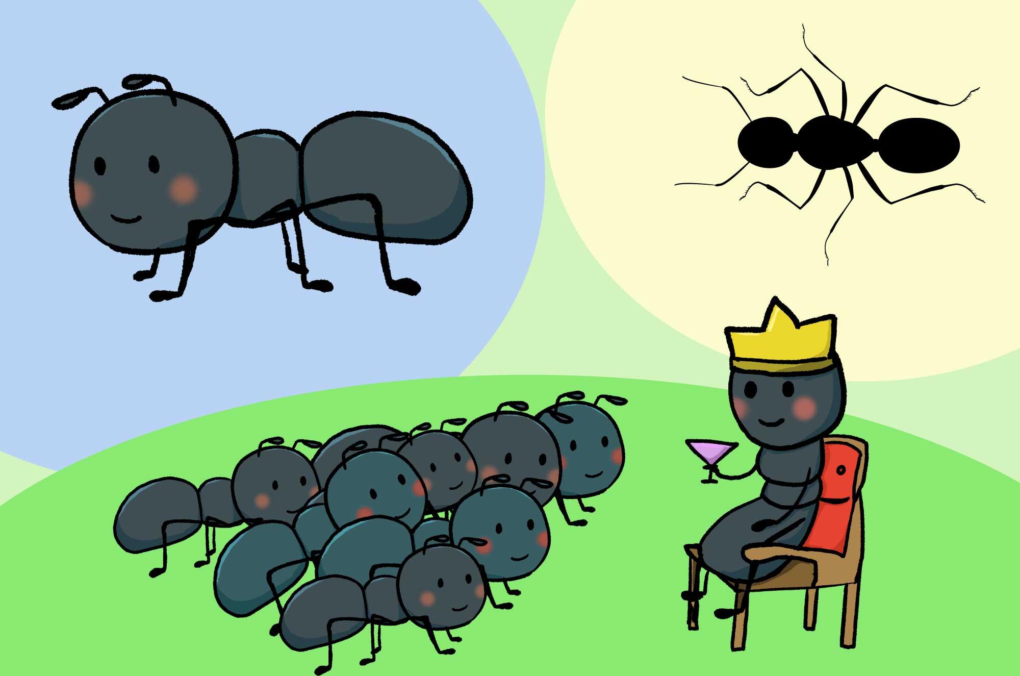 蟻のイラスト - リアル・可愛いタッチの昆虫無料素材