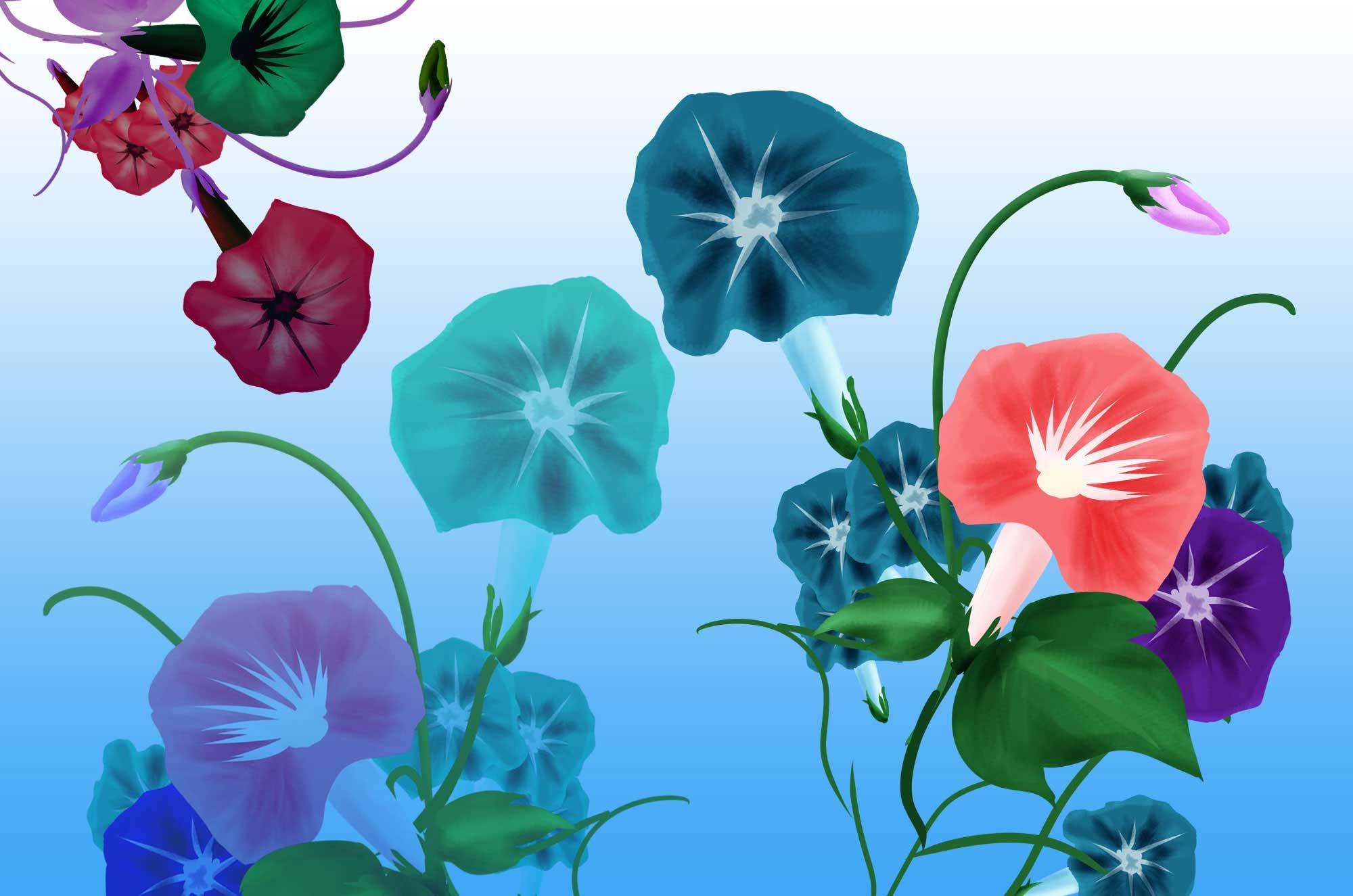 咲き乱れる色々なカラーの朝顔