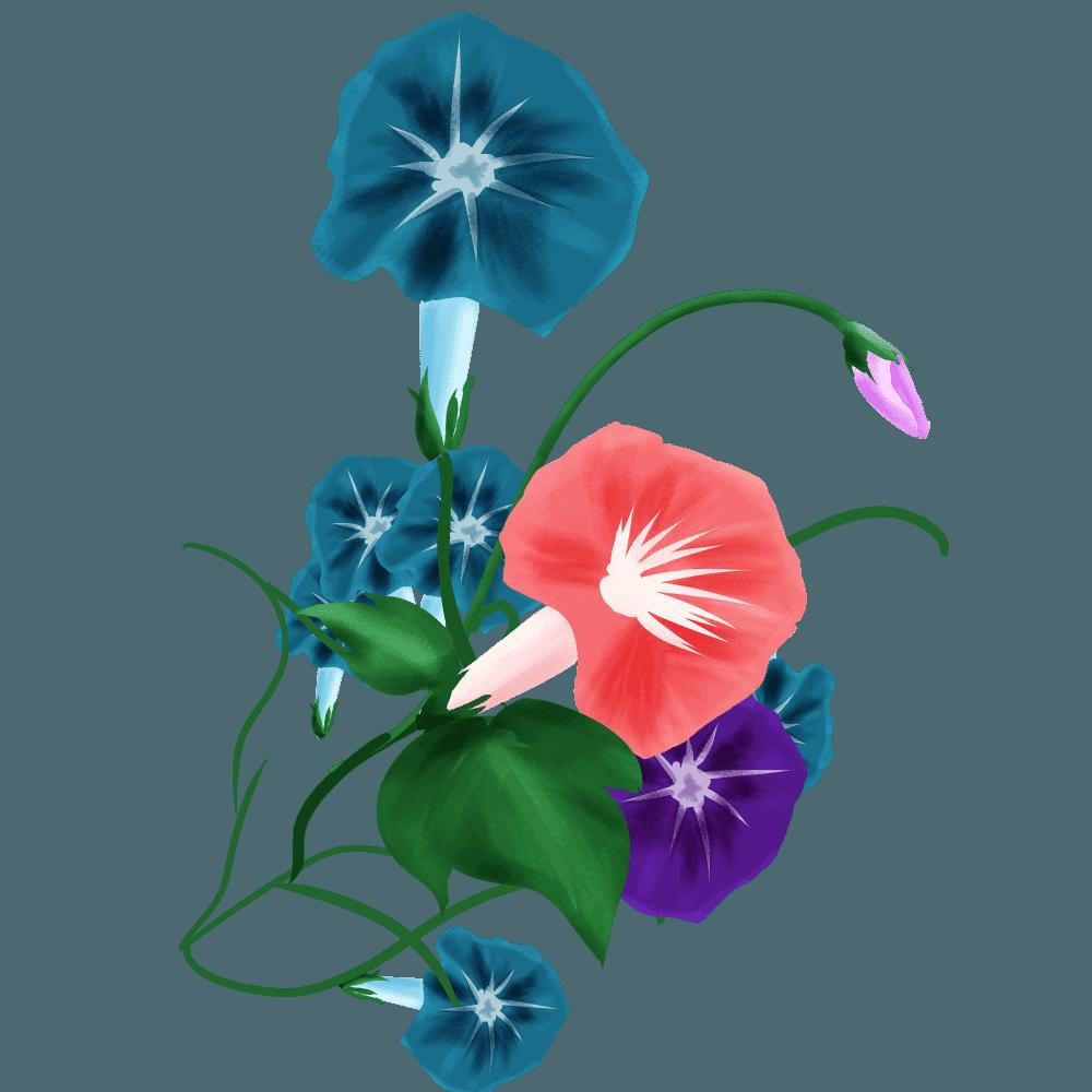 咲き乱れる朝顔