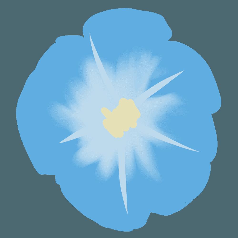 青い朝顔の花