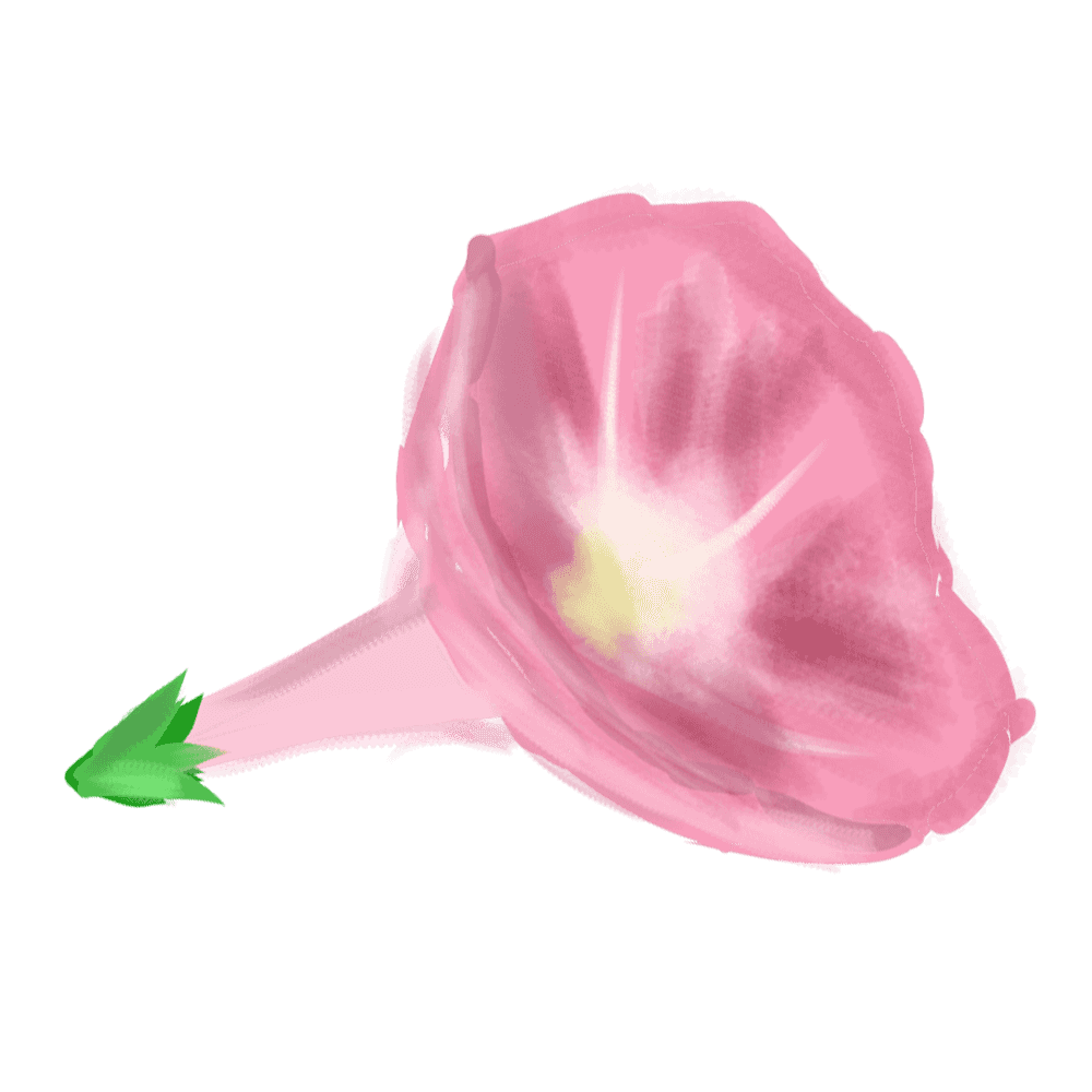 横から見た朝顔の花