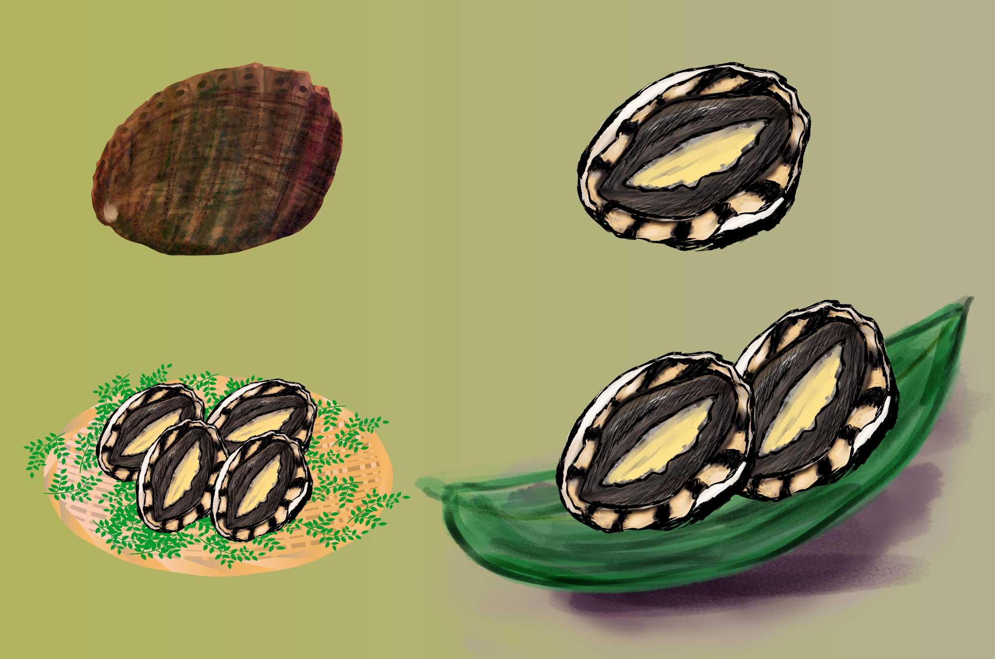 あわびイラスト - フリーの和風タッチ海産物無料素材