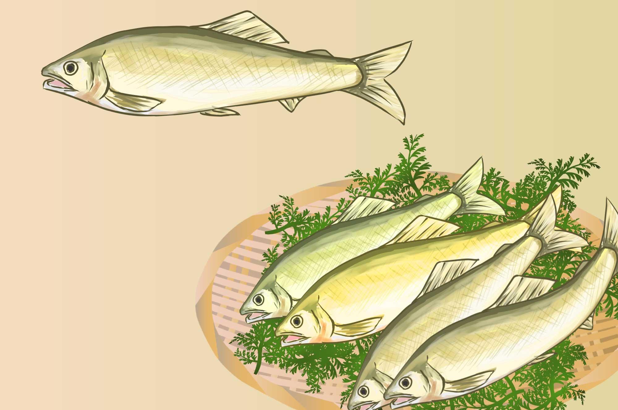 鮎(アユ)のイラスト - カラー・白黒無料の川魚の素材