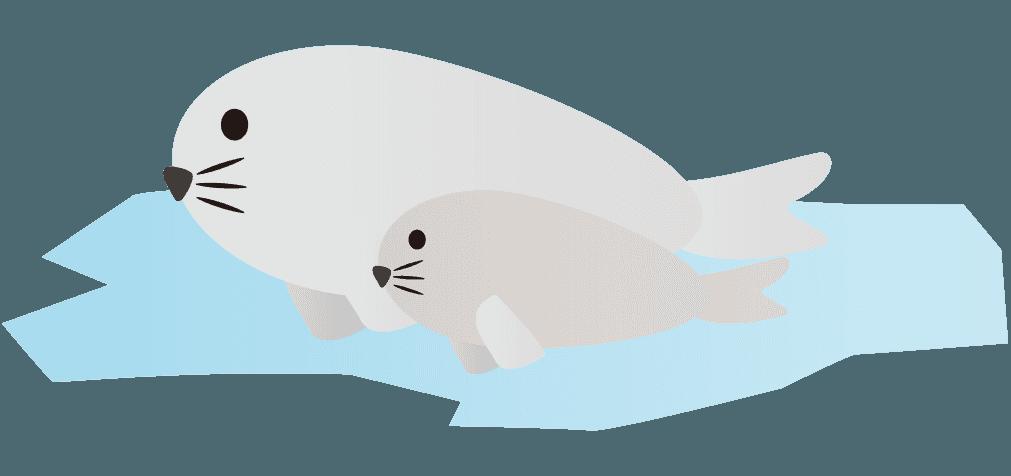 流氷に乗る親子のあざらしイラスト