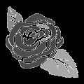 白黒の薔薇のイラスト