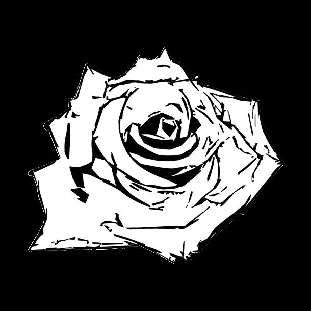 白い薔薇のイラスト