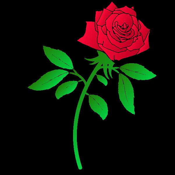 おしゃれな薔薇のイラスト3