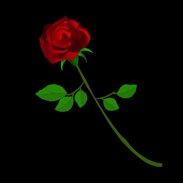 おしゃれな薔薇のイラスト4