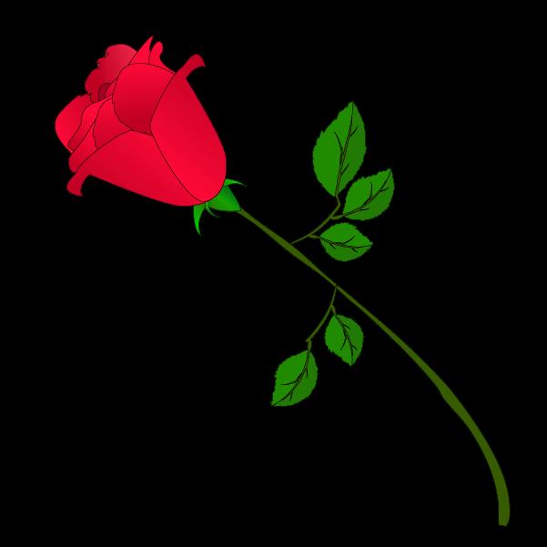 薔薇つぼみのイラスト2