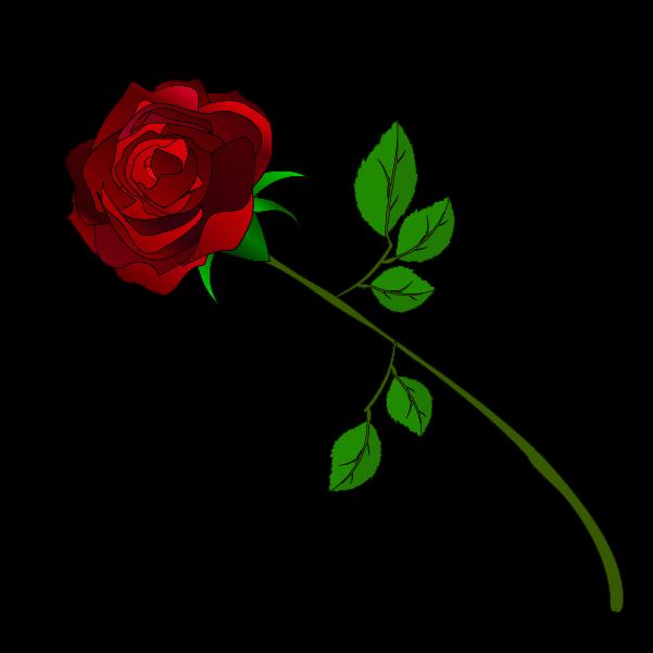 おしゃれな薔薇のイラスト5
