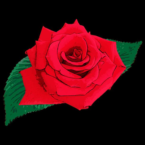リアルな薔薇のイラスト