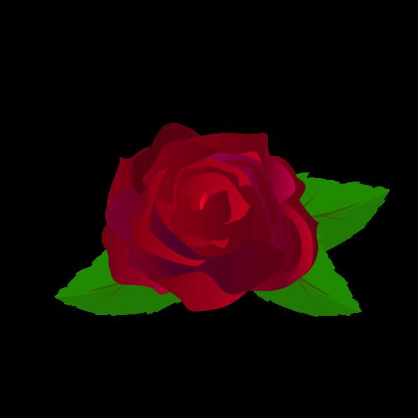 薔薇の飾り2イラスト