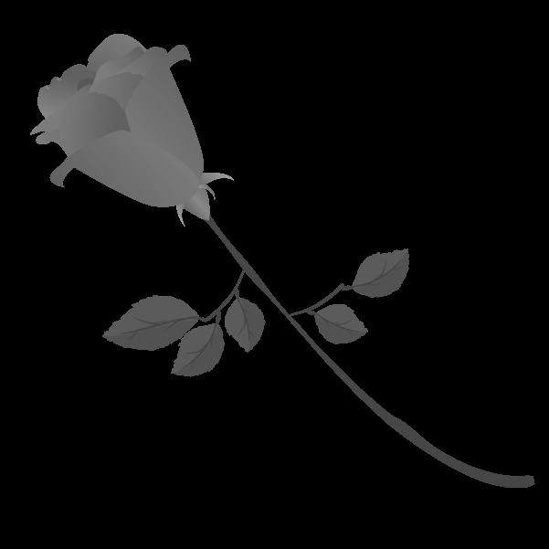 白黒の薔薇のイラスト10