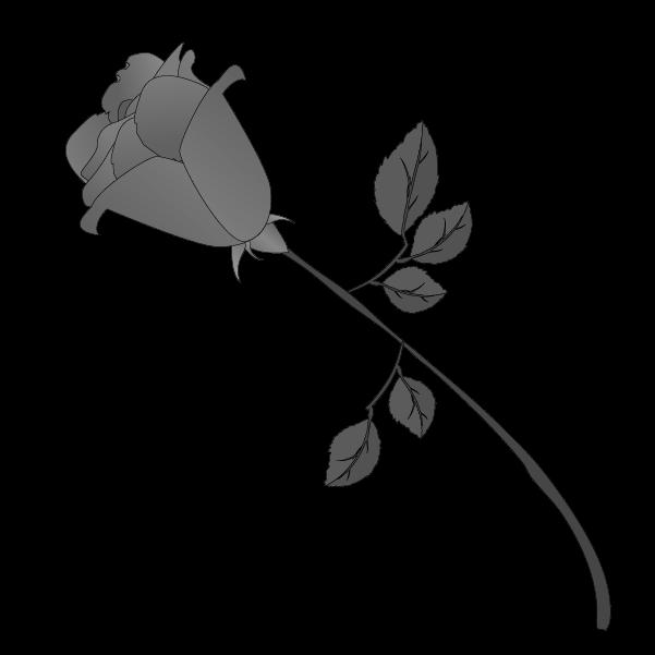 白黒の薔薇のイラスト11