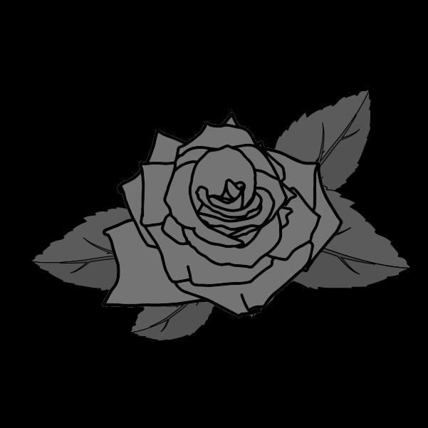 白黒の薔薇のイラスト13