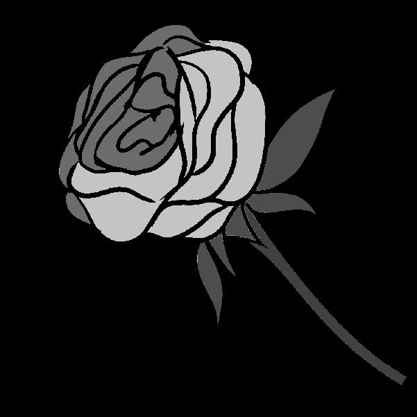 白黒の薔薇のイラスト25