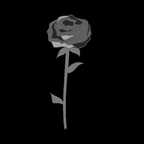 白黒の薔薇のイラスト29