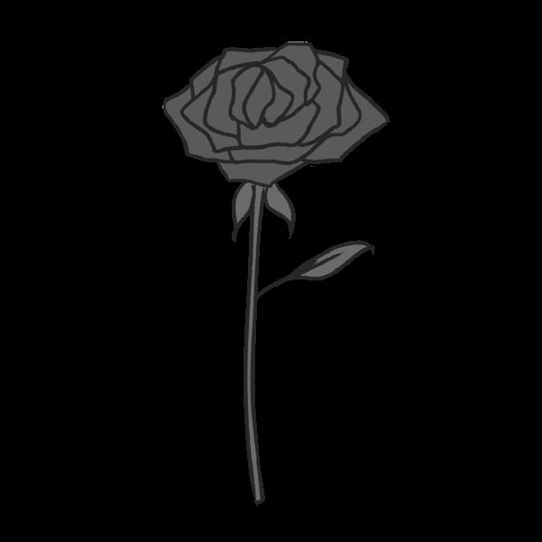 白黒の薔薇のイラスト32