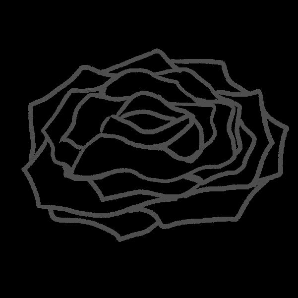 白黒の薔薇のイラスト35