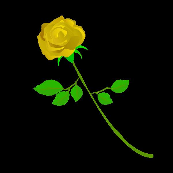 黄色い薔薇のイラスト2