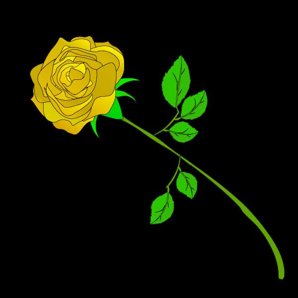 黄色い薔薇のイラスト3