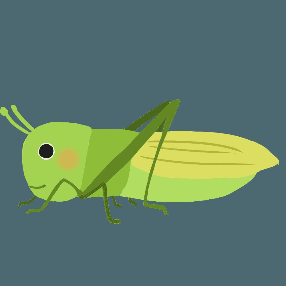 バッタイラスト - 飛んだりはねたり可愛い昆虫無料素材 - チコデザ