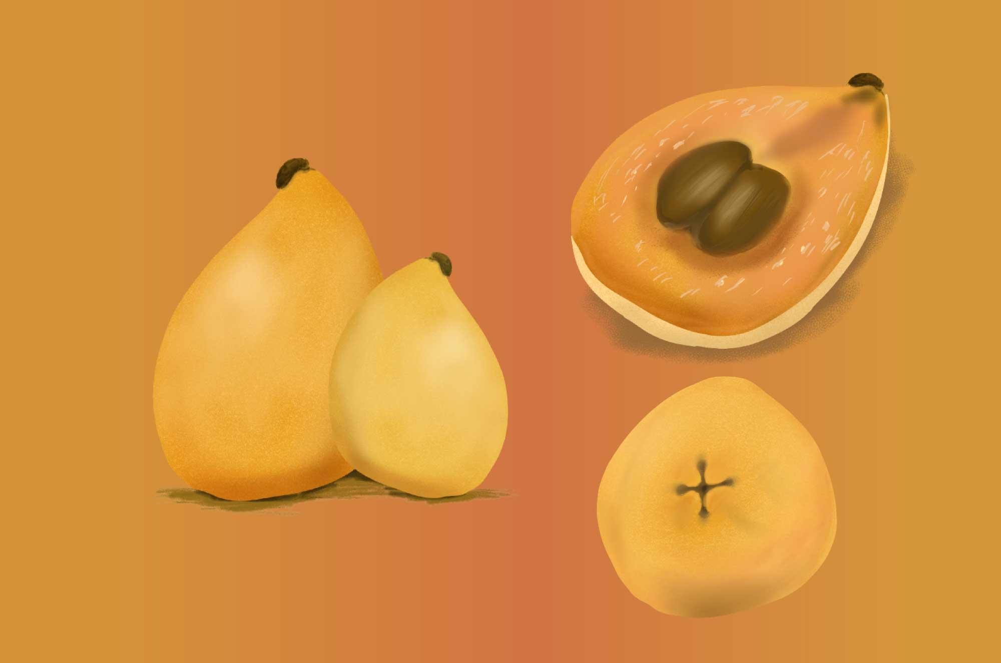 ビワの無料イラスト - 季節のフルーツフリー素材