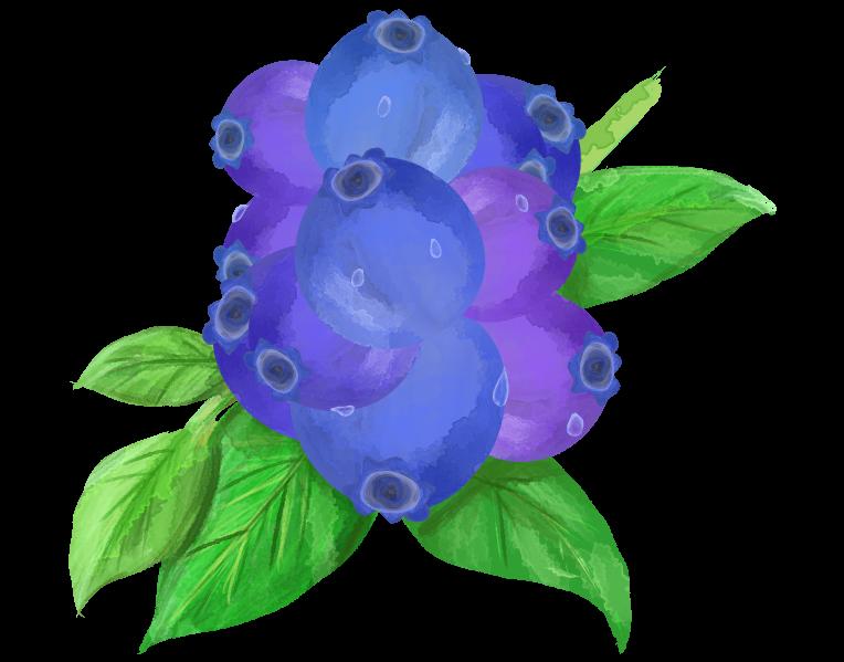 カラーのブルーベリーのイラスト