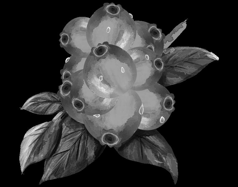 白黒のブルーベリーのイラスト