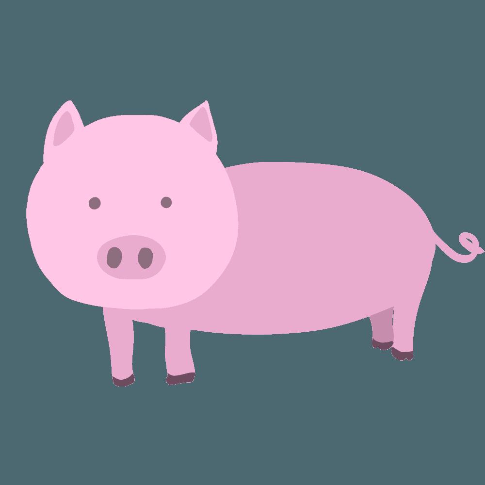 こちらを見つめる豚イラスト