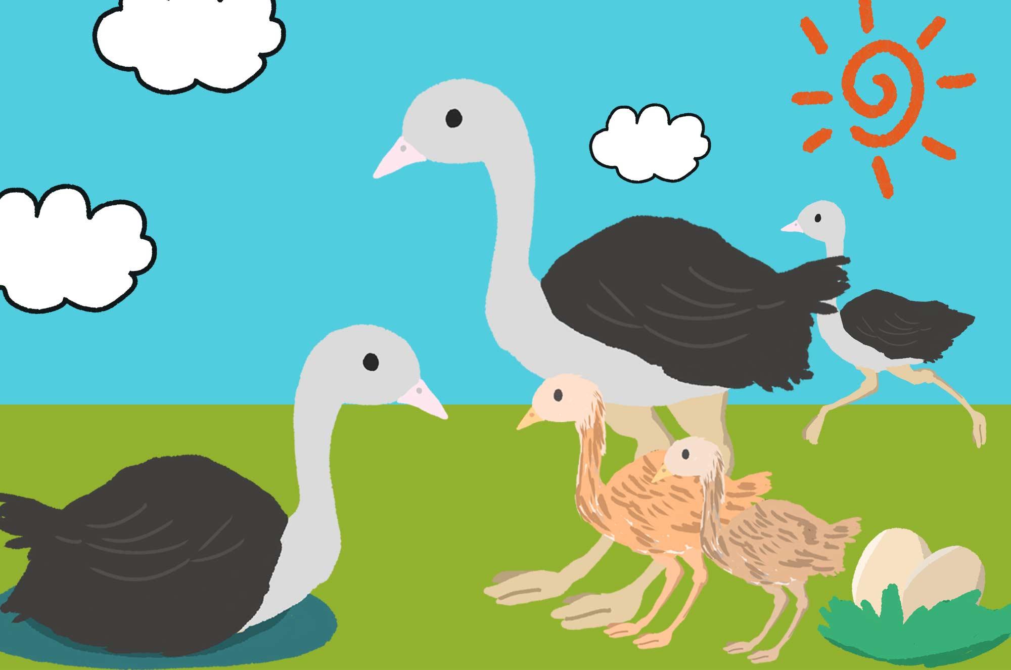 ダチョウのイラスト - 可愛い雛と卵の鳥の無料素材