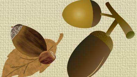 どんぐりイラスト - 可愛い木の実の無料素材集
