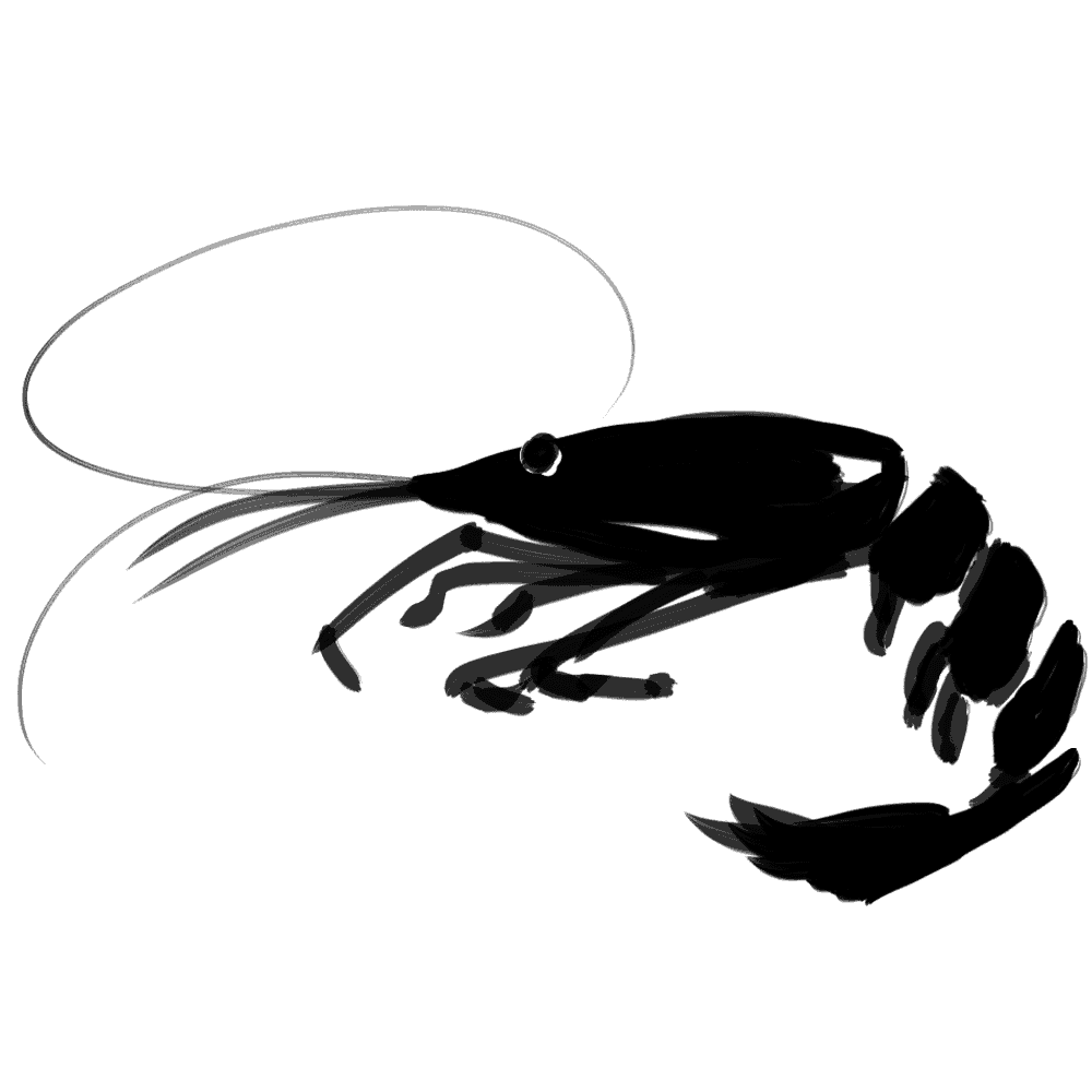 水墨画のエビイラスト