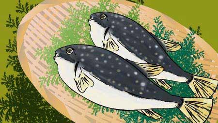 ふぐイラスト - フリーで使える海の面白高級魚の素材