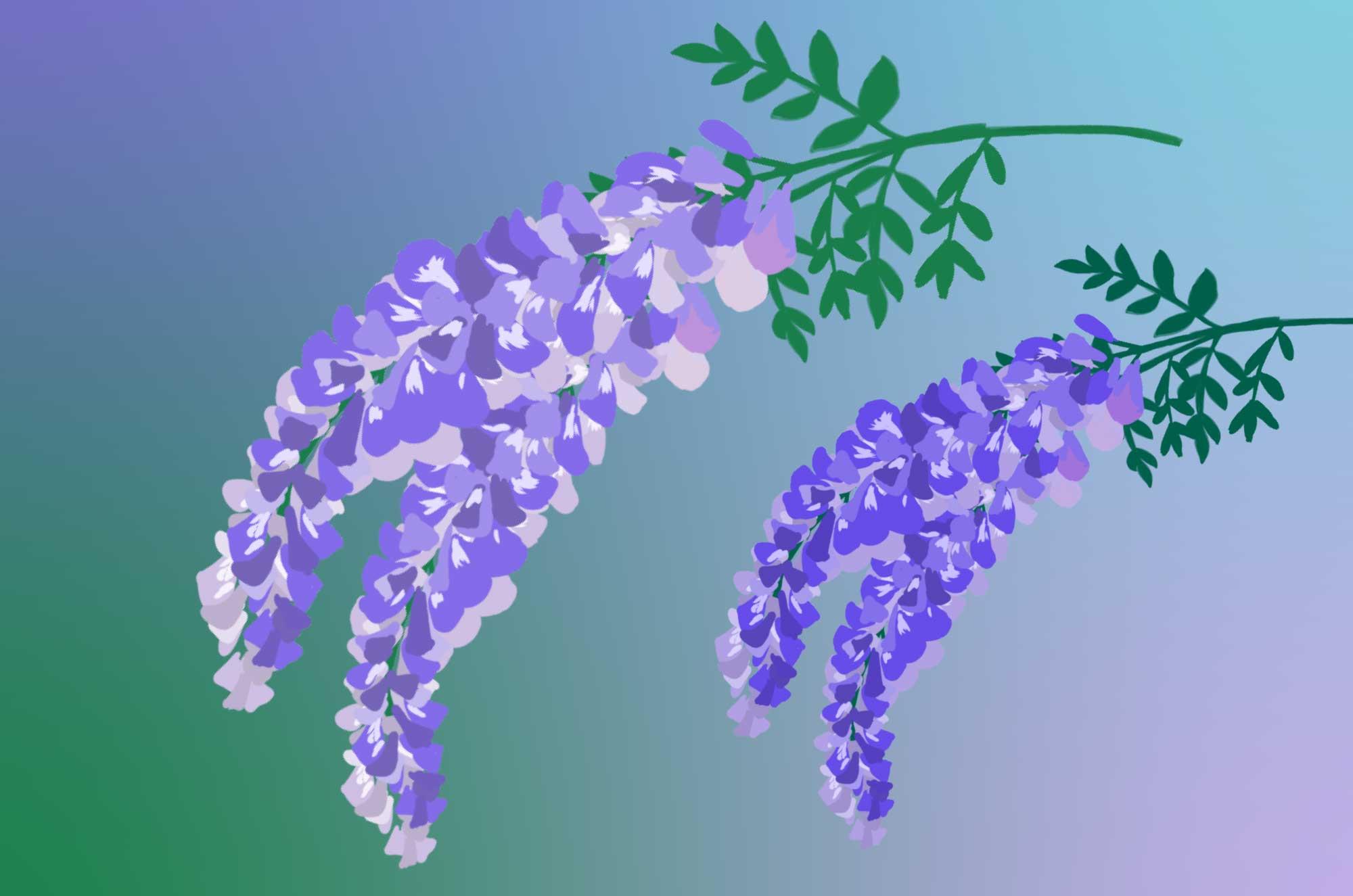 藤の花のイラスト - 無料で使える綺麗な花の素材