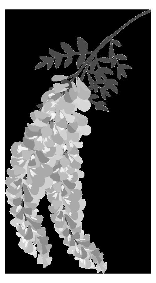 藤の花イラスト(白黒)