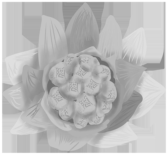 手書きの可愛いフキノトウのイラスト(白黒印刷用)