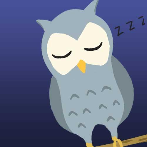 夜に寝ているフクロウ