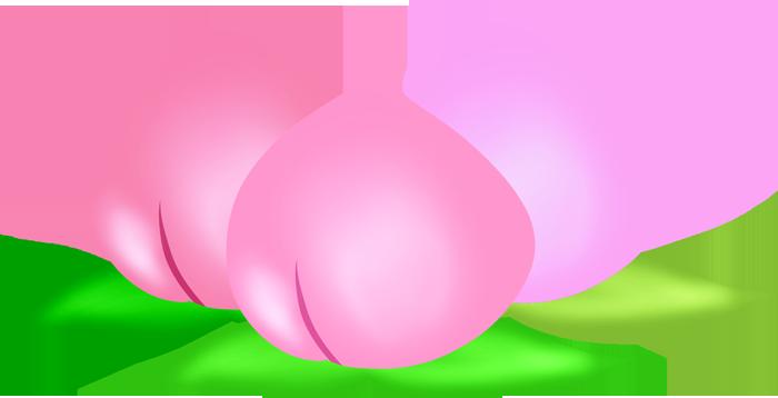 福島の桃のイラスト