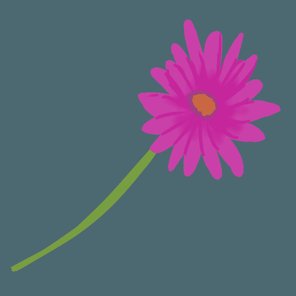 紫色のガーベライラスト